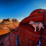 My husky Ranger living up to his name! This was on out hike to see the Wave rock formation in S Utah/N Arizona.
