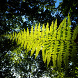 Low angle view of fern