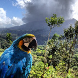 this friendly macaw paused on the nearby railing just long enough to snap a view pictures of him before the majestic volcano at arenal.