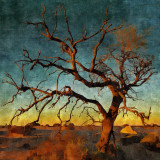 Bare tree on desert during twilight