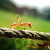 Close-up view of ant on rope