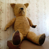 Old Ted