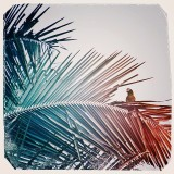 Parrot sitting in palm tree