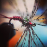 This is a Pheasant Tail with a Tenkara style soft partridge hackle. I have found that using red pheasant tail feathers is very effective. The dubbing is a metal Quick Descent peacock color. It's fairly heavy for a Tenkara fly and that gets it down quickly in pocket water.