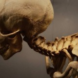 Human Skeleton at the Museum of Osteology