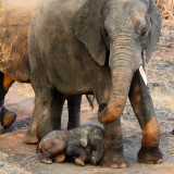 Mother and baby elephant in Sabi Sabi