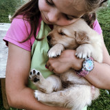 Girl embracing and showing affection to her golden retriever puppy