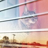 View of cat behind window