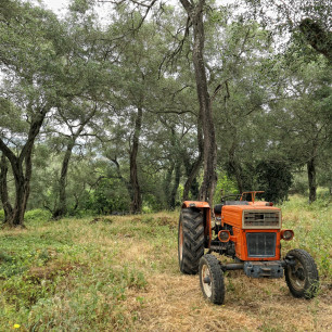 Old tractor in an olive tree plantation at Corfu Island (Greece