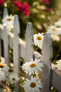 Pretty little flowers lined up on my fence :)