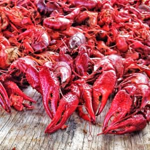 View of crawfishes