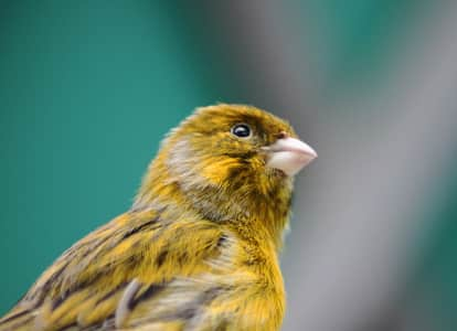 Little Bird At the Seaford Tropical House and Gardens, Northern Ireland