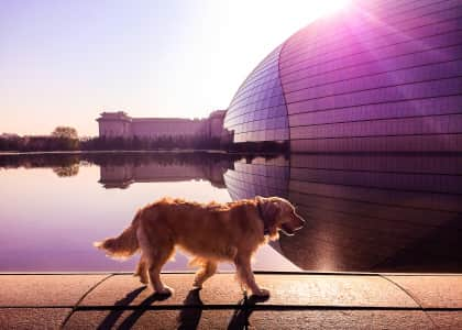 A dog is walking on the pond edge outside the National Grand Theater in the early morning sun shine.  Beijing, China.  国家大剧院外,一条正在 水塘的边沿上散步。