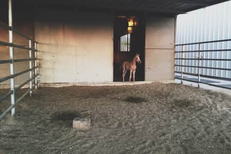Foal venturing out.