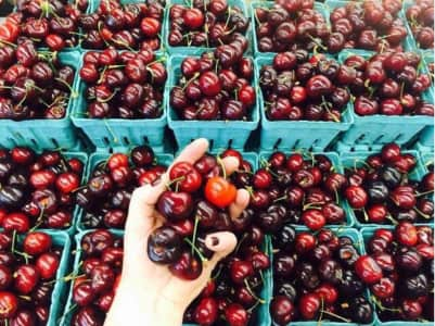 Season's First Cherries