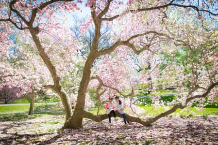 Girls playing under the Magnolia tree