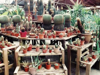 Cactus section of Greenhouse