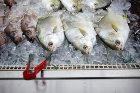 In this case, fish aren't friends. They are food. (Or at least they will be soon.)