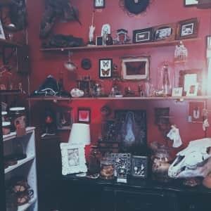 My favorite oddity shop! The Bearded Lady.