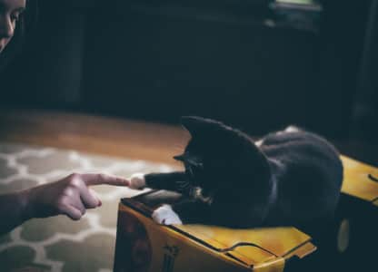 Finger and Paw