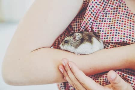Hamster on a girls arm