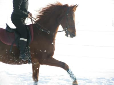 Horse galloping through the winter snow