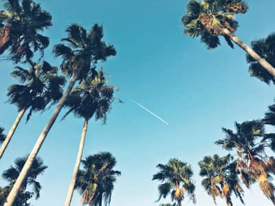 Plane and Palms