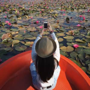 Capturing in the lotus pond..