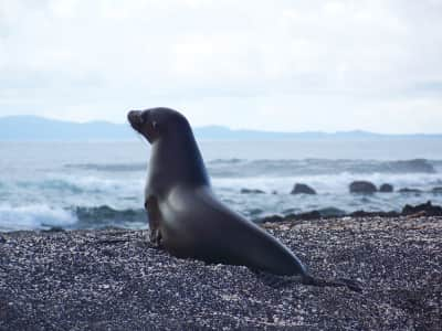 Sea lion on the Galápagos Islands