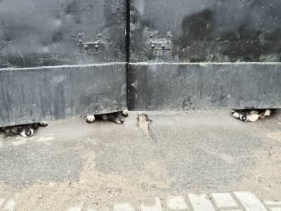 Dogs on the street
