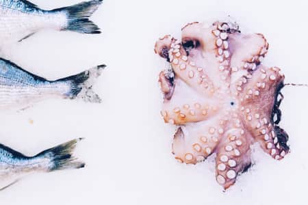 Octopus, fish, seafood