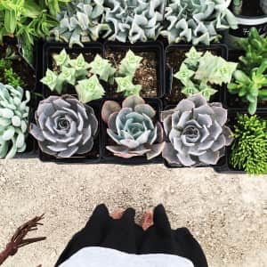 Succulents at the farmer's market