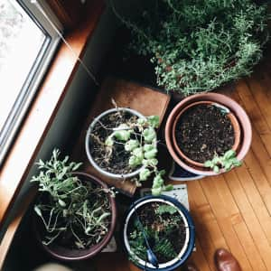 Plants and Pots by the Window