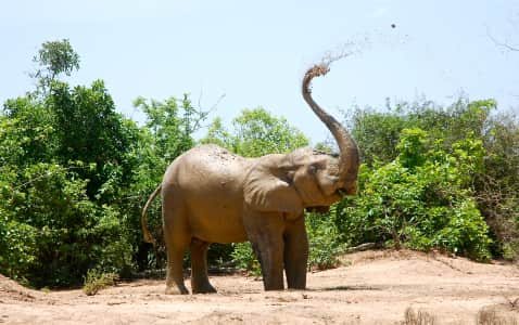 Elephant cooling down