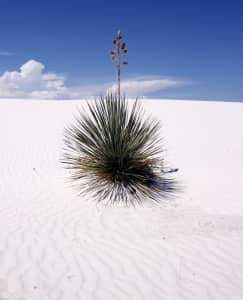 White Sands USA