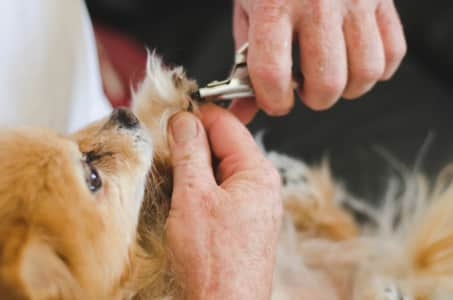 cutting dog nails.