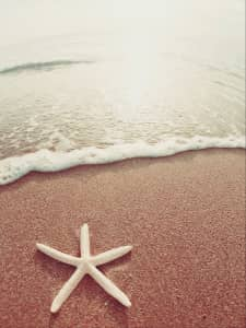 Starfish on shore