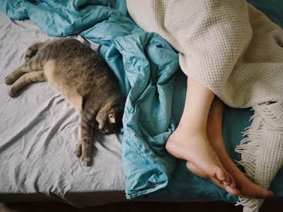 Sleep,sleepy, sleeping, cat, home cat, feet, human, bed, blankets, tranquility, calm, bedroom, bedding