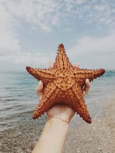 Starfish found on the beach