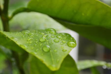 Raindrops on a green leaf