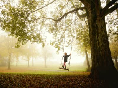 Girl On a swing hanging on a big tree branche
