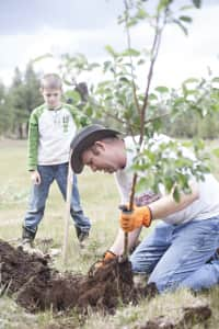 Planting an orchard.