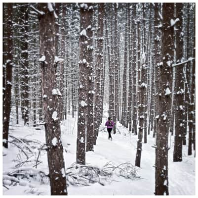 Quietly through the pines - Simcoe Forest, Barrie Ont Canada