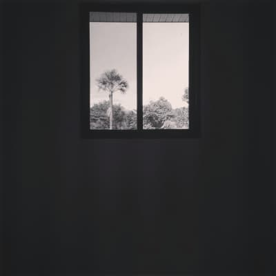 A tree from a window