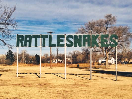 Rattlesnakes on Old Route 66.