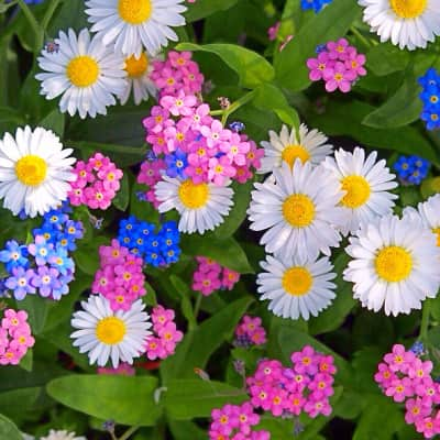 All kinds of flowers profusion.