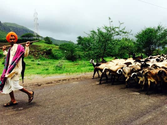 Sheep herder looks at me in anger when I take this epic snap In India😅😎