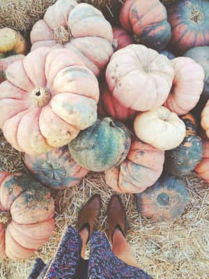 Large pumpkins of all colors.