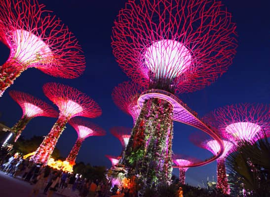 Gardens by the bay at night•Singapore