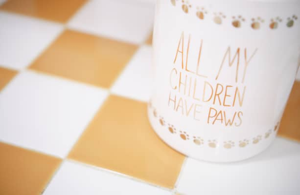 All my children have paws 🐾